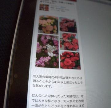 「スマホ」閲覧にはブログの写真は縦置きが良いと思う理由