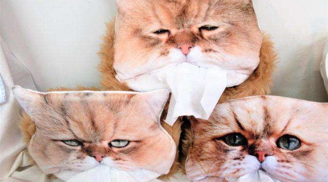 しょんぼり顔のふーちゃんをティッシュカバーにすると普段の暮らしに笑顔が増えます♪