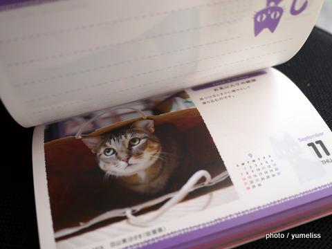 フェリシモ猫グッズ60351