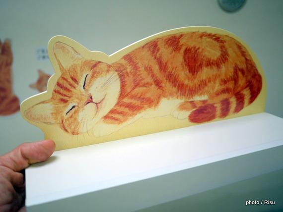 高い所ですやすや眠る 猫のカーテンレール